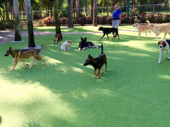 Artificial Grass Photos: Grass Installation Valley Center, California Pet Grass, Dogs Park