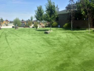 Artificial Grass Photos: Synthetic Pet Grass Lake San Marcos California for Dogs