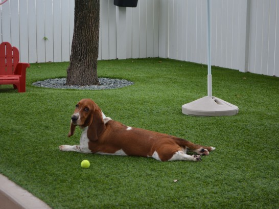 Artificial Grass Photos: Turf Grass Escondido, California Indoor Dog Park, Dogs
