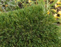Double S-72 Artificial Grass